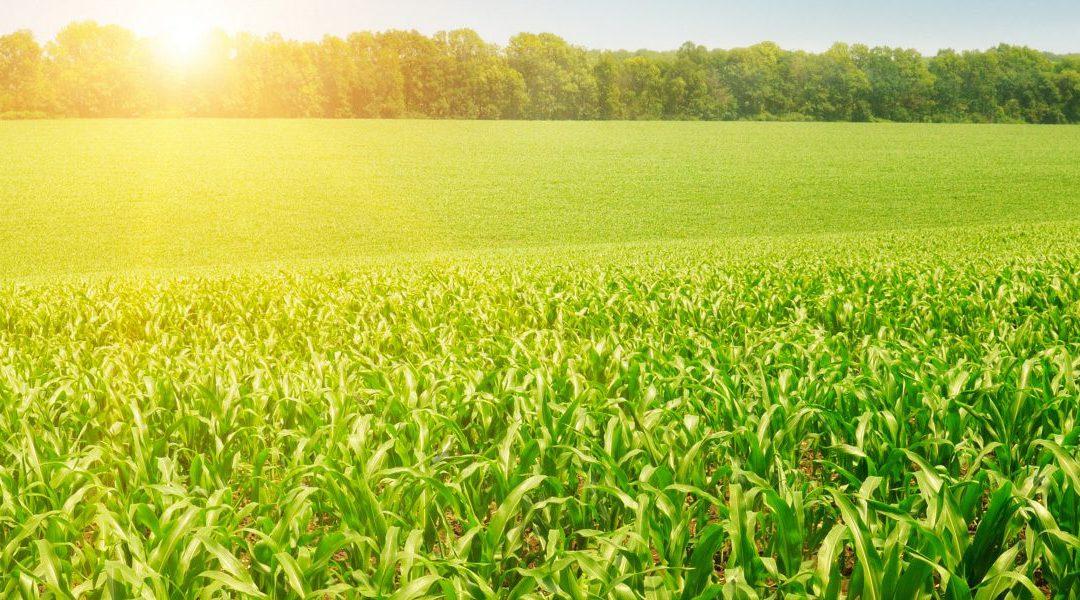 Плодородие почвы: 7 лет с No-Till